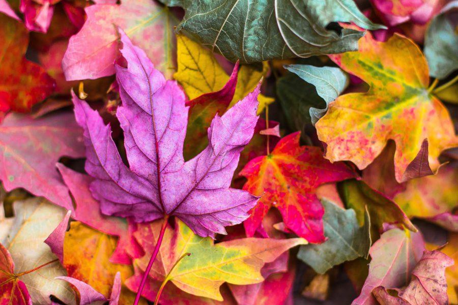 herfst, fall, herfstdipje