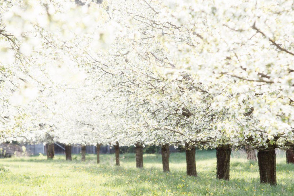 what's new, april, lente