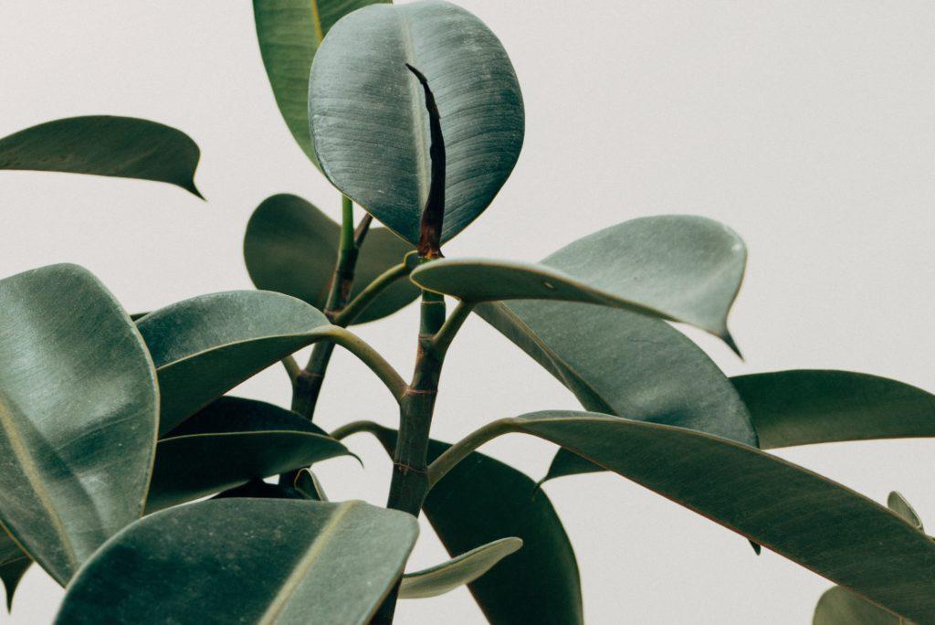 planten tips, planten gezond, plant, sustee