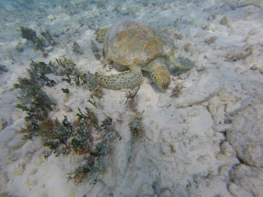 snorkelen, schildpad, curaçao tips, curacao tips