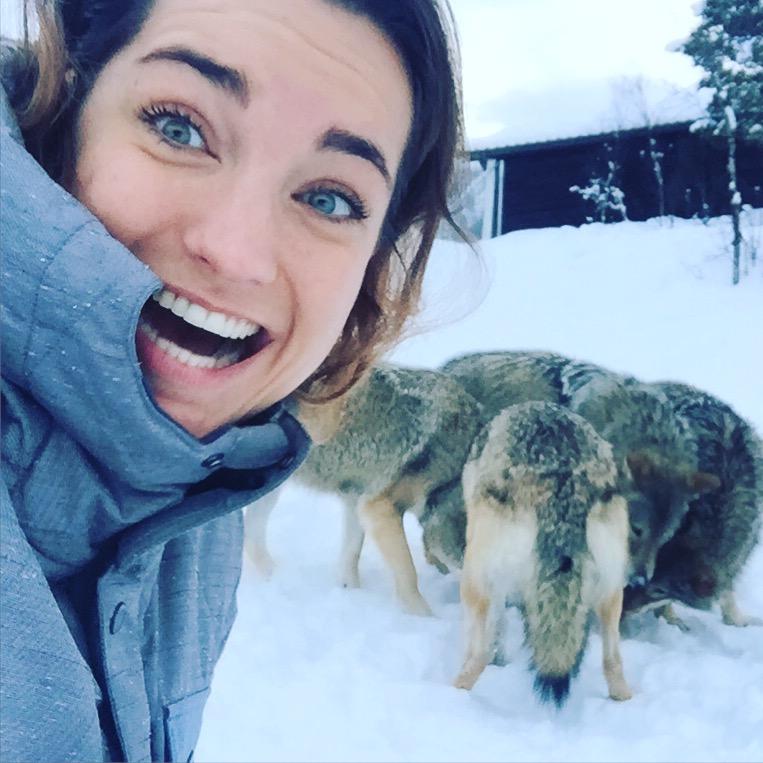 noorwegen wolven polar park