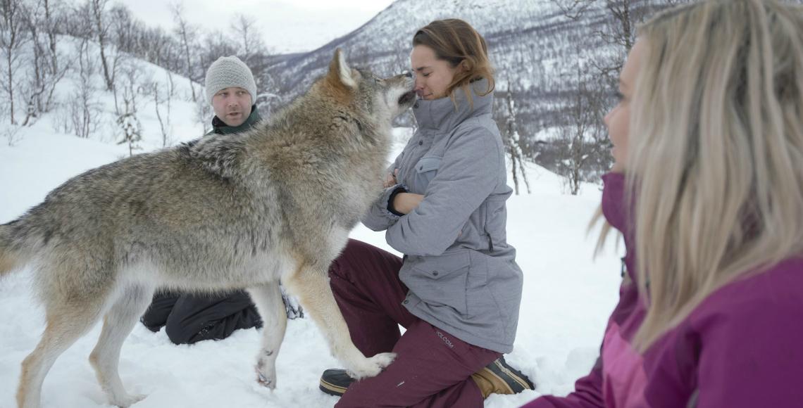 noorwegen wolven